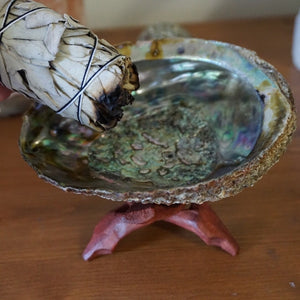 Abalone Shell - Sparkle Rock Pop