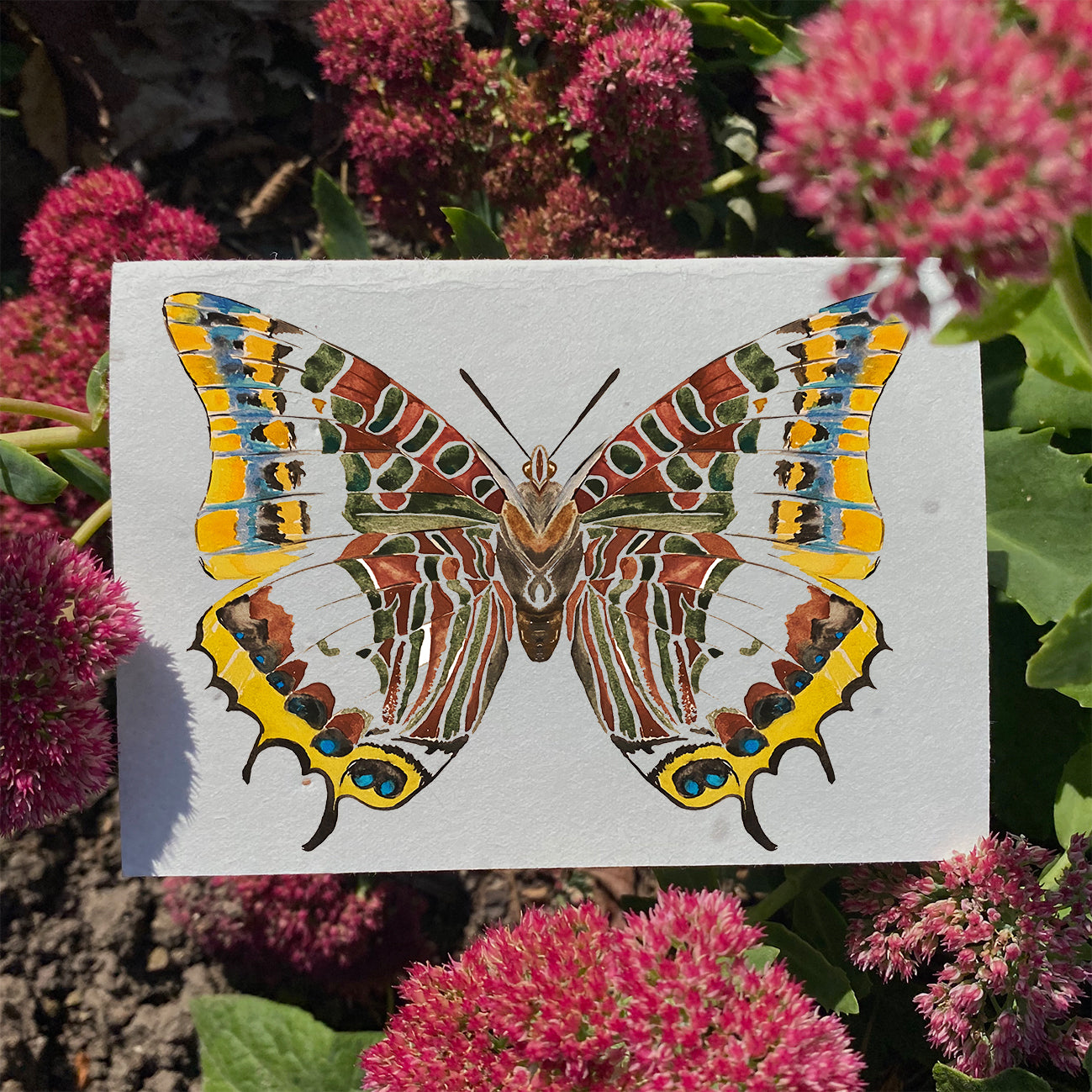 Butterfly - Plantable Wildflower Card | Greetings Card - The Naughty Shrew