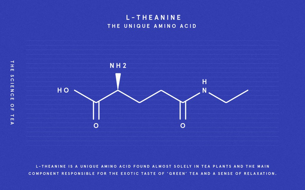 Supplement L-theanine with Matcha Green Tea, Best L-theanine Benefits