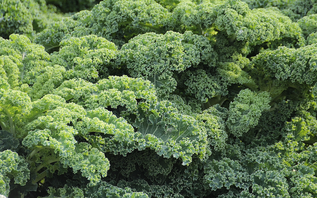 What is Sulforaphane and Why is it Important?