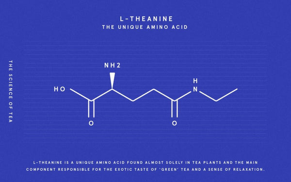 chalkboard drawing of L-theanine molecule from matcha green tea, on a blue background and white lines