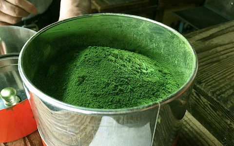 large silver bowl full of ceremonial matcha powder, super premium grade tea ready for packaging