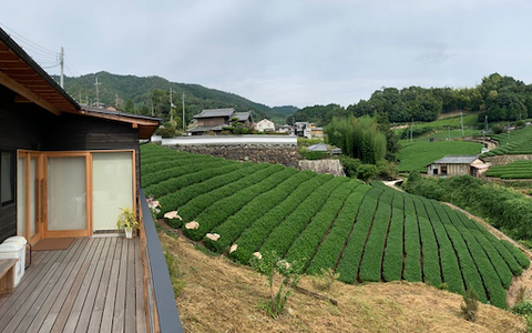 overlooking tea fields in Uji, Japan producing highest quality matcha in the world