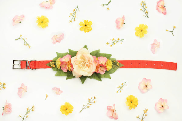 """BARX + BLOOMS RELEASE: Autumn Sunset"" Collar 