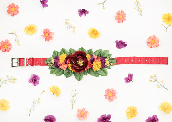 """BARX + BLOOMS RELEASE: Sugar & Spice"" Collar 
