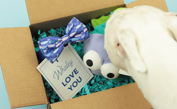 """BARX + BLOOMS NEW RELEASE: I Whaley Love You"" Box 
