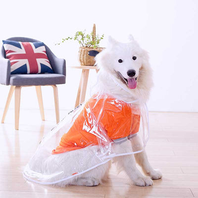 White Samoyed Wearing a Waterproof Clear Transparent Dog Raincoat With Hood by  Pawsome Market