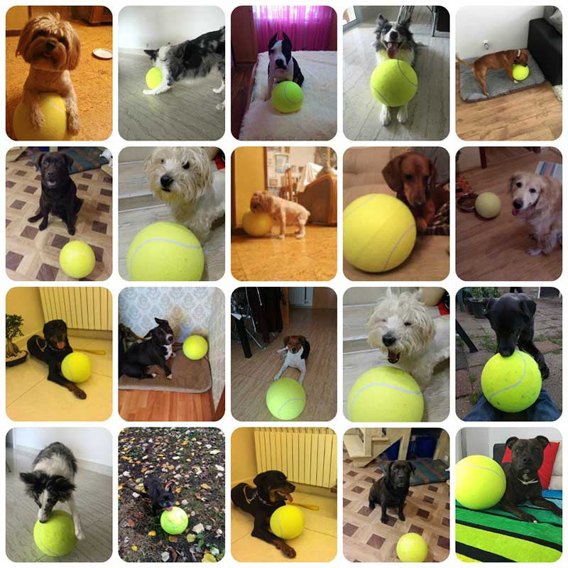 Giant Tennis Ball For Dogs Pawsome Market
