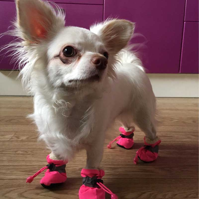 Chihuahua Wearing Waterproof Pink Small dog boots for winter padded with fleece inside, 2018 Pawsome Market