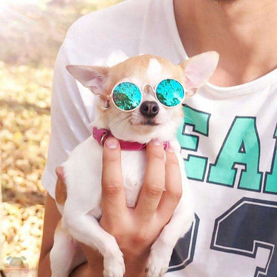 Chihuahua dog wearing the hippie Colorful Retro Cool Dog Sunglasses Pawsome Market