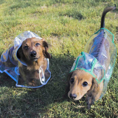 Dachshund Doxie White Green Transparent Dog Pet Cat Raincoat With Hood Pawsome Market