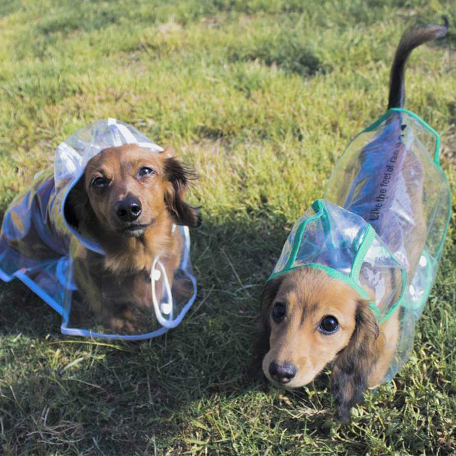 Two beautiful Dachshunds wearing a Transparent Clear Dog Pet Raincoat With Hood Pawsome Market
