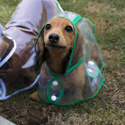 Dachshund Doxie White Transparent Dog Pet Cat Raincoat With Hood Pawsome Market
