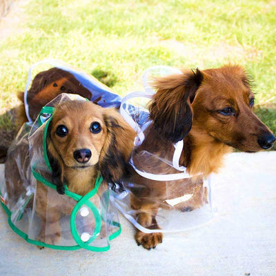 Dachshund White Green Transparent Dog Pet Cat Raincoat With Hood Pawsome Market
