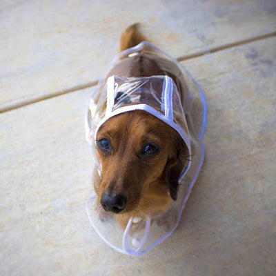 Dachshund White Transparent Dog Pet Cat Raincoat With Hood Pawsome Market.jpg