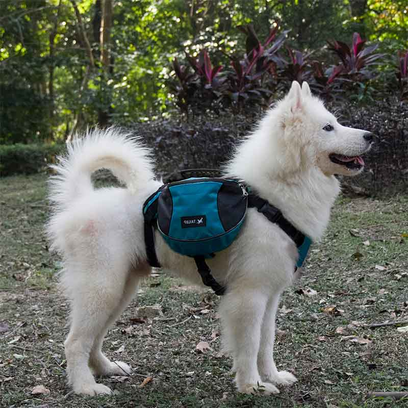 PawHike™ Dog Backpack Saddle Bag For Travel Camping Hiking, Beautiful White Samoyed wearing a red dog saddle backpack in the forrest