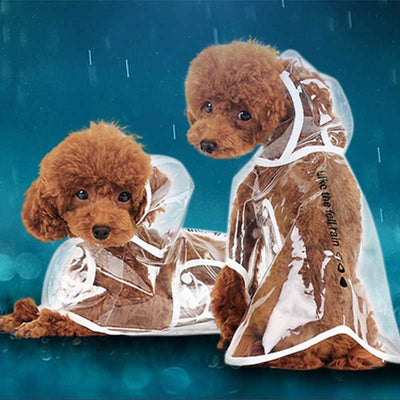 Poodle Rain Transparent Dog Pet Cat Raincoat With Hood poodle Pawsome Market