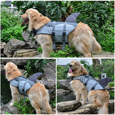 Big Golden Retriever Dog wearing the Grey Shark Fin Design Safety Dog Life Jackets - Salty Paws