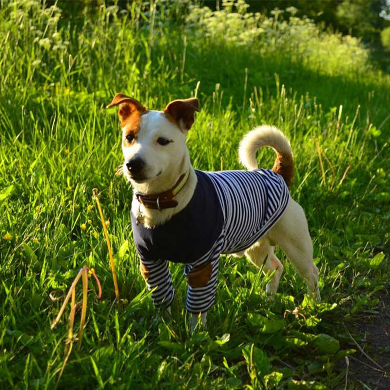 Best selling Navy Dog Shirt - Ahoy Matey