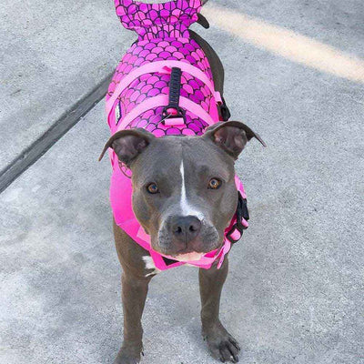 Large Pit-bull Dog wearing the purple Mermaid Design Safety Dog Life Jackets - Salty Paws