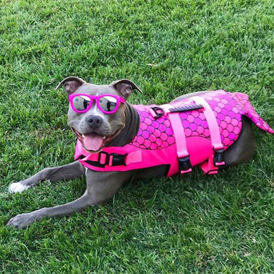 Large Pit-bull Dog wearing pink sunglasses and the purple Mermaid Design Safety Dog Life Jackets - Salty Paws