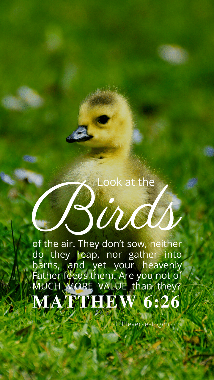 Christian Wallpaper – Baby Duck Matthew 6:26