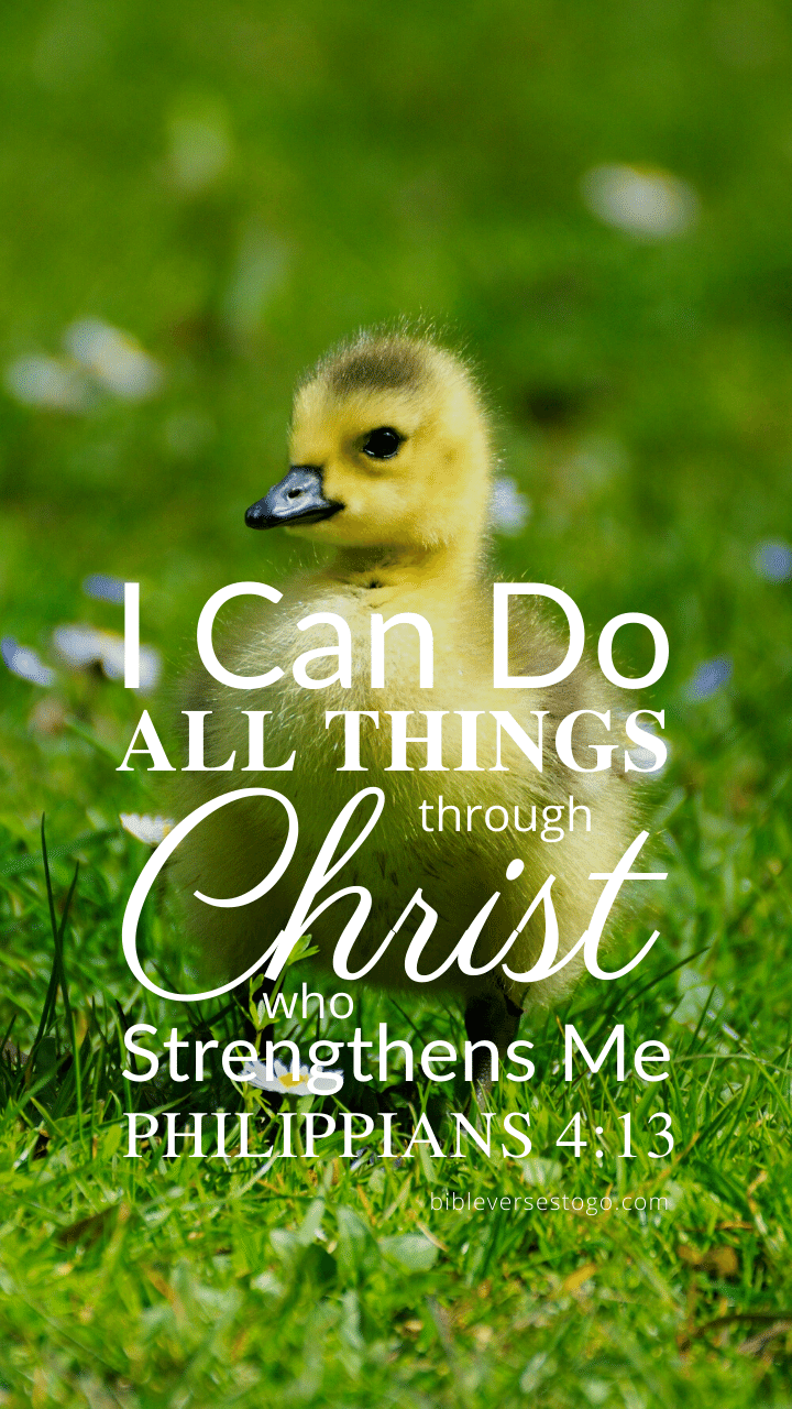 Christian Wallpaper – Baby Duck Philippians 4:13