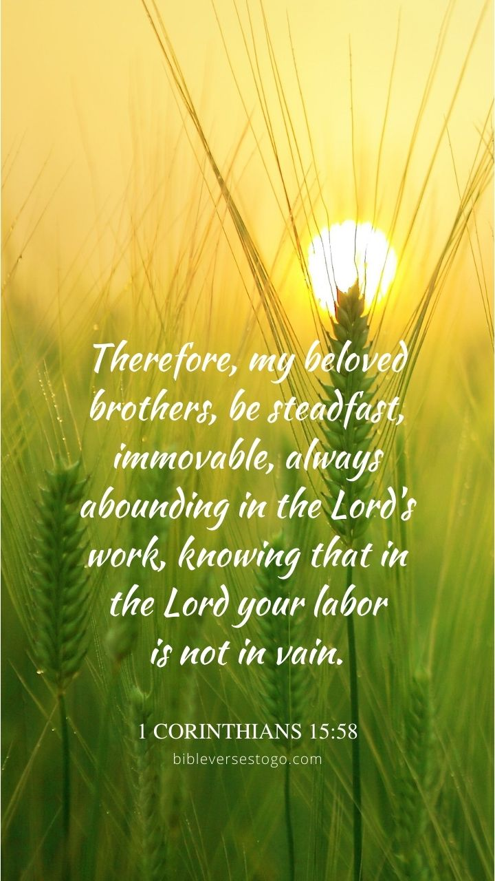 Christian Wallpaper - Barley Field 1 Corinthians 15:58