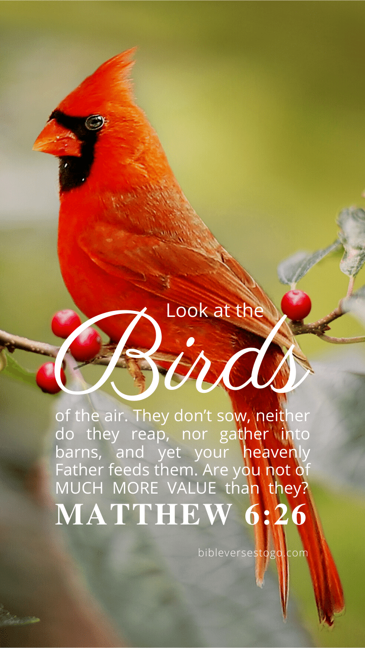 Christian Wallpaper – Cardinal Matthew 6:26