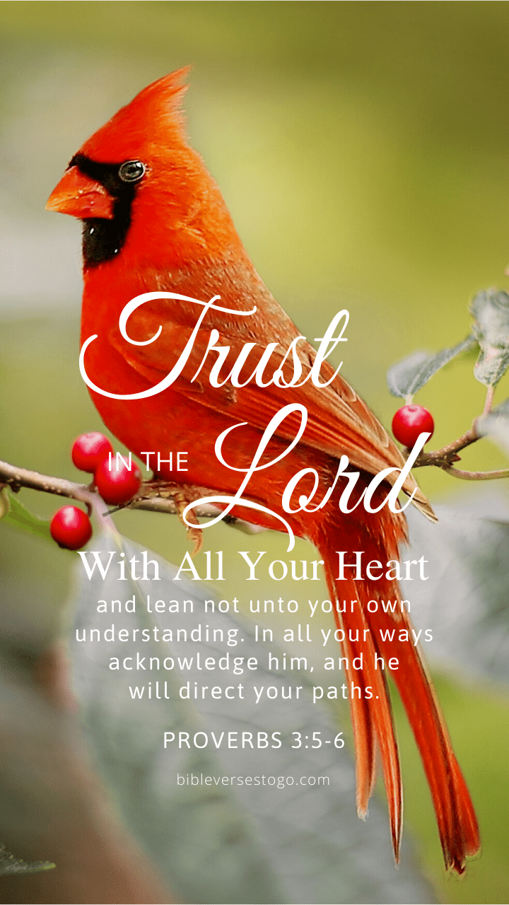Christian Wallpaper – Cardinal Proverbs 3:5-6