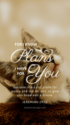Christian Wallpaper - Cat Eyes Jeremiah 29:11