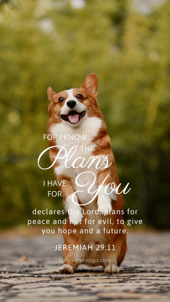 Christian Wallpaper – Corgi Jeremiah 29:11