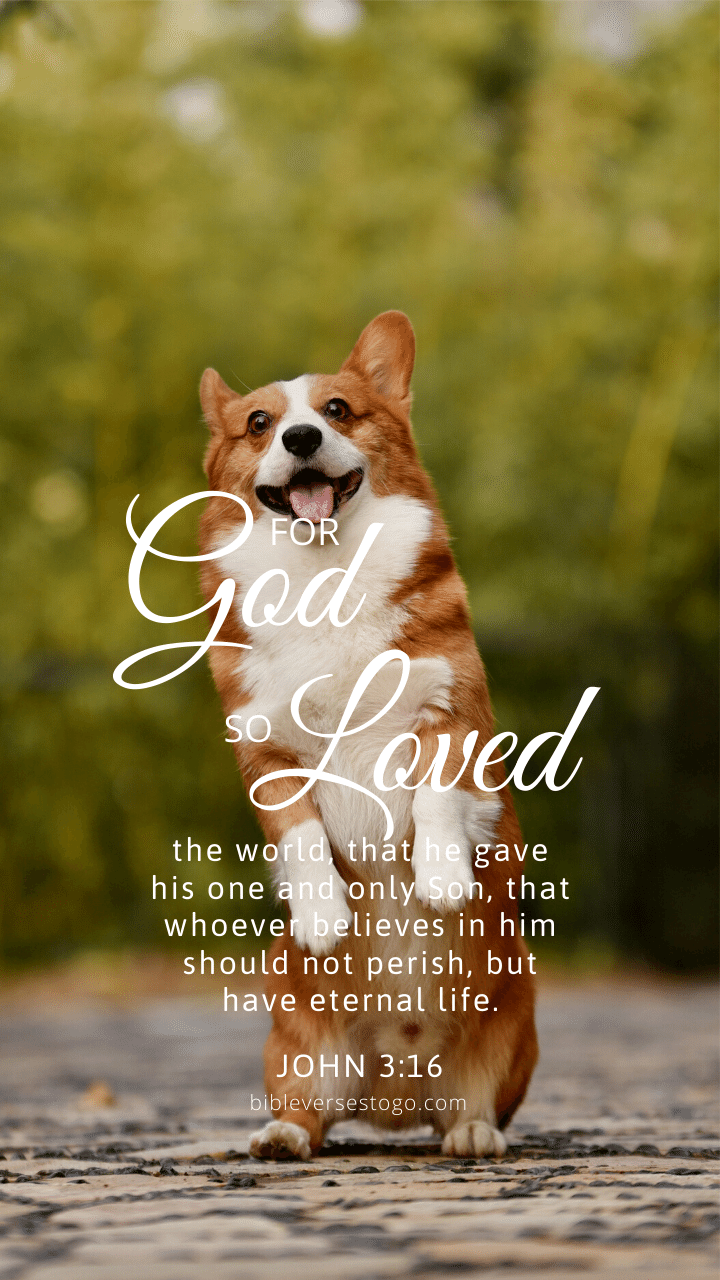 Christian Wallpaper – Corgi John 3:16