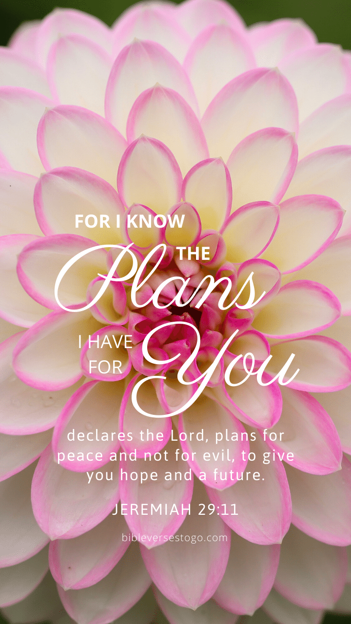 Christian Wallpaper – Dahlia Jeremiah 29:11