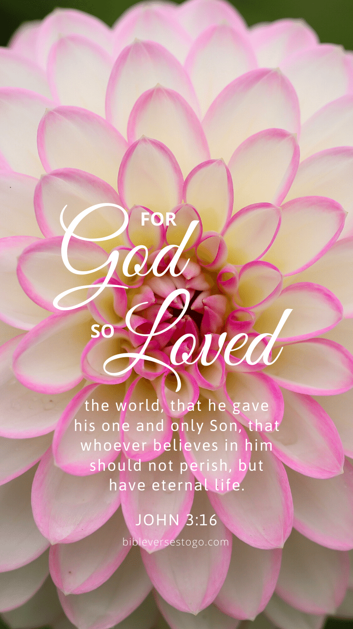 Christian Wallpaper – Dahlia John 3:16