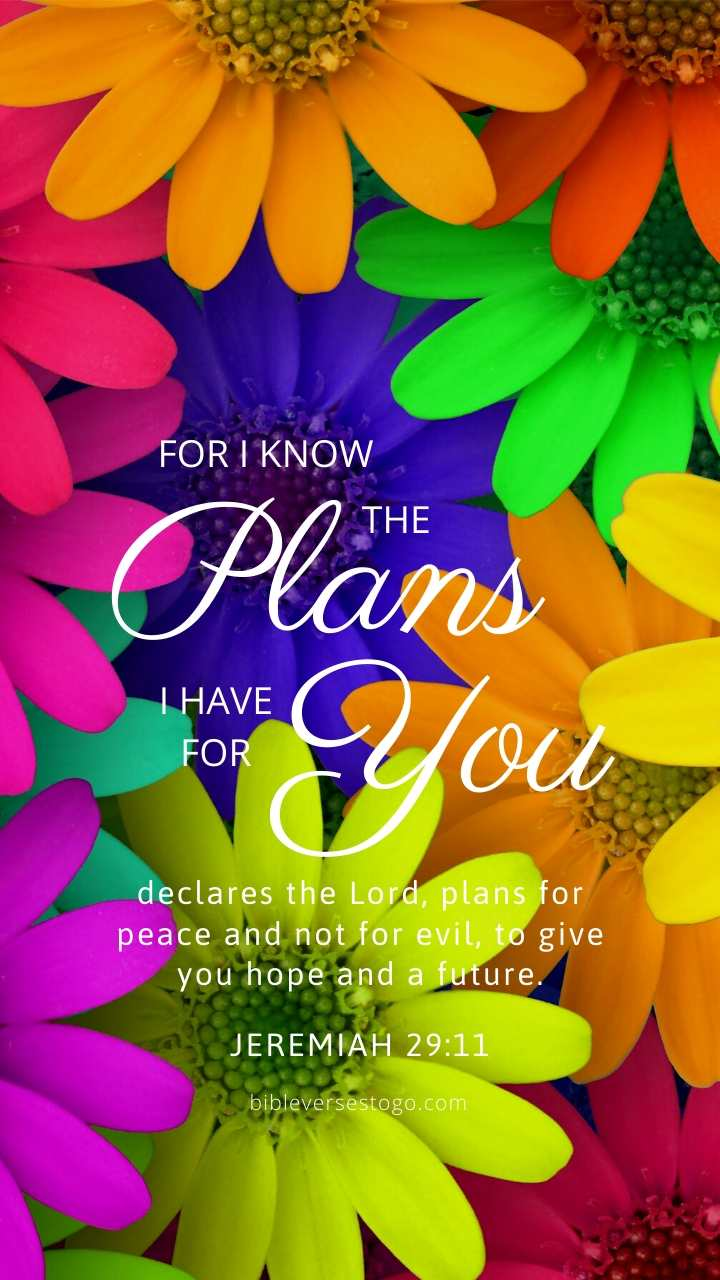 Christian Wallpaper – Daisy Mix Jeremiah 29:11