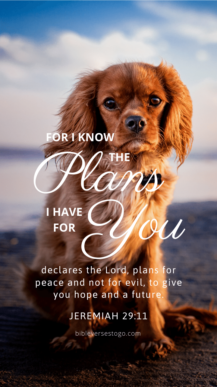 Christian Wallpaper - Dog Hope Jeremiah 29:11