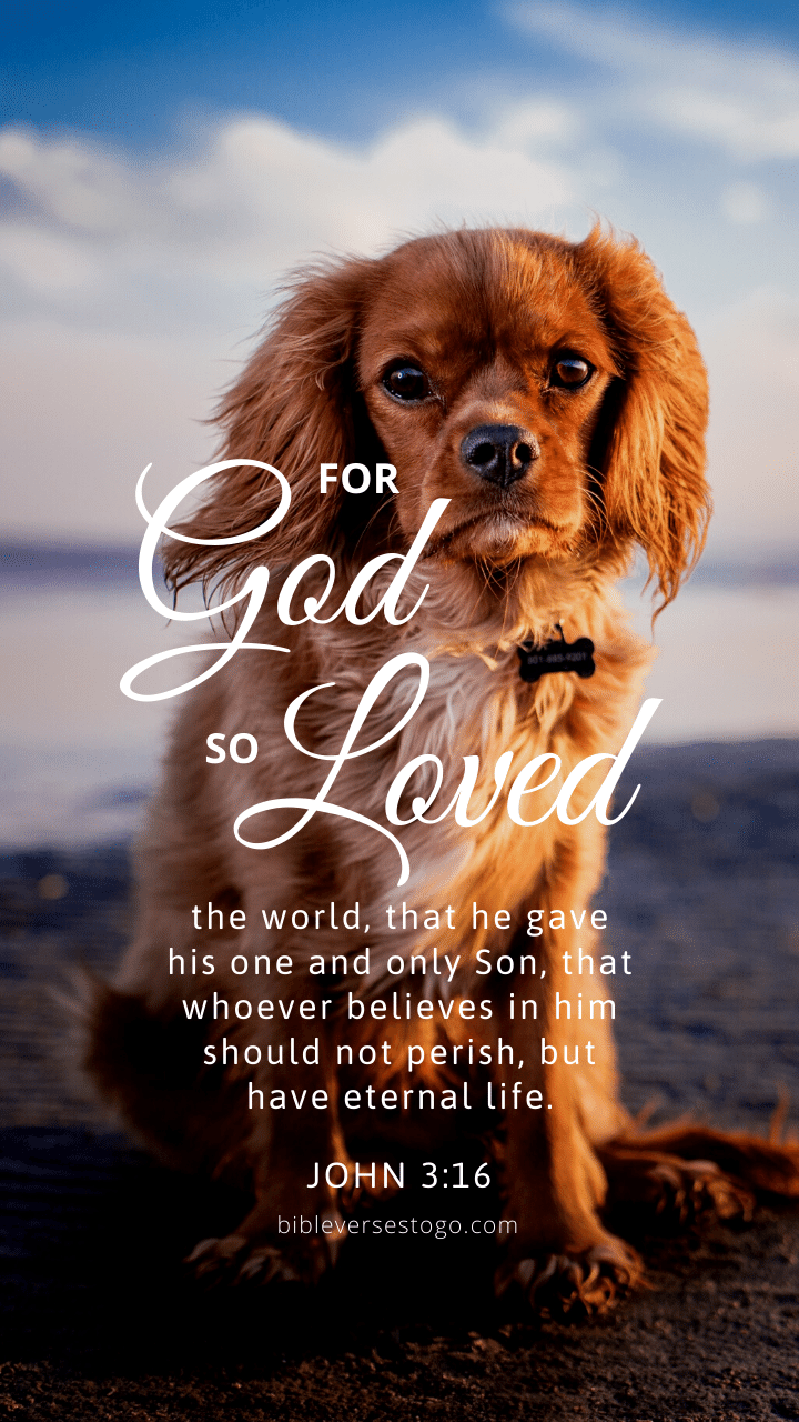 Christian Wallpaper - Dog Hope John 3:16
