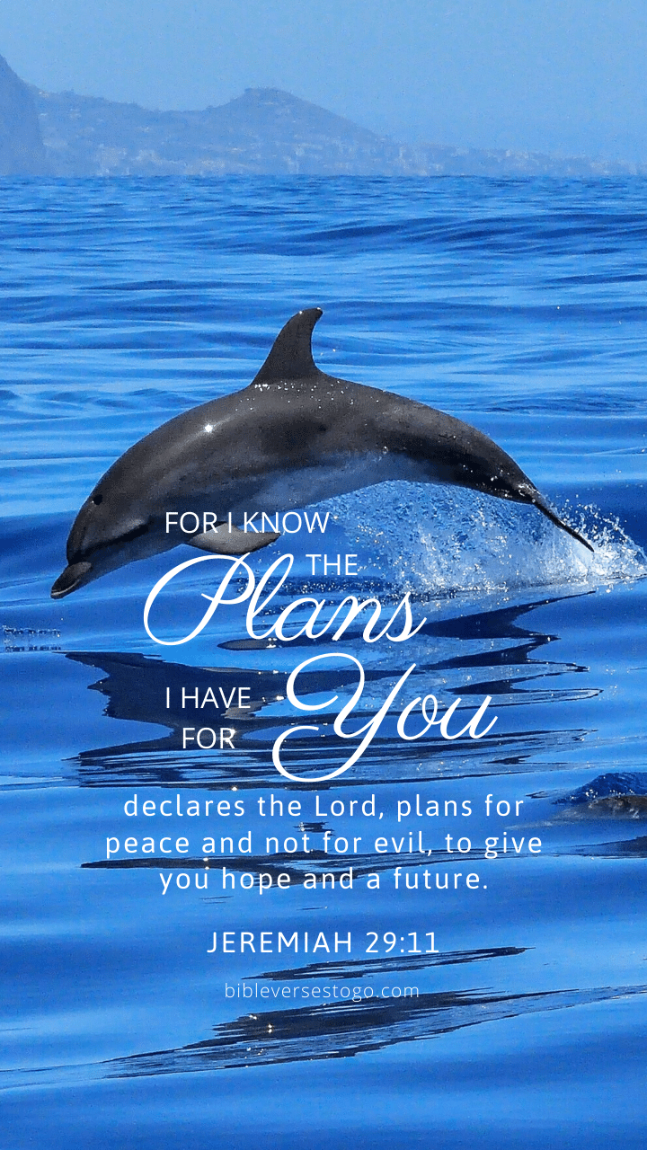 Christian Wallpaper – Dolphin Jeremiah 29:11