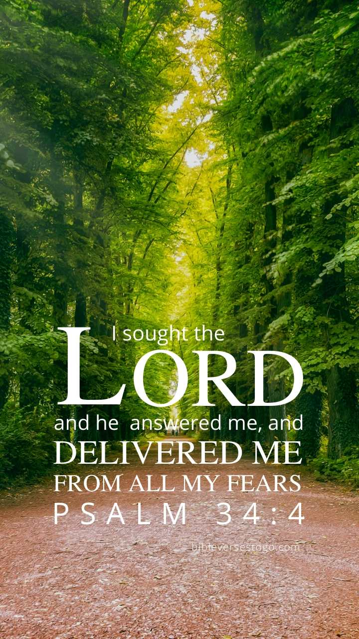 Christian Wallpaper - Forest Road Psalm 34:4