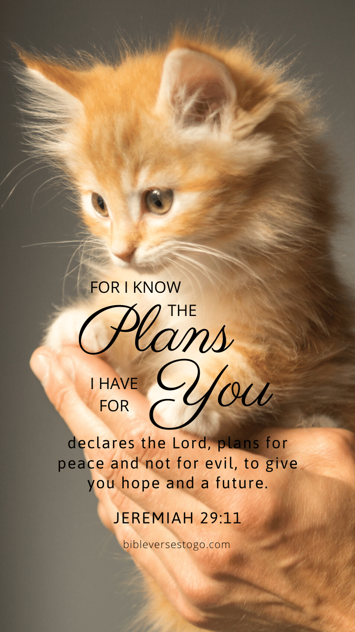 Christian Wallpaper - Kitten Jeremiah 29:11