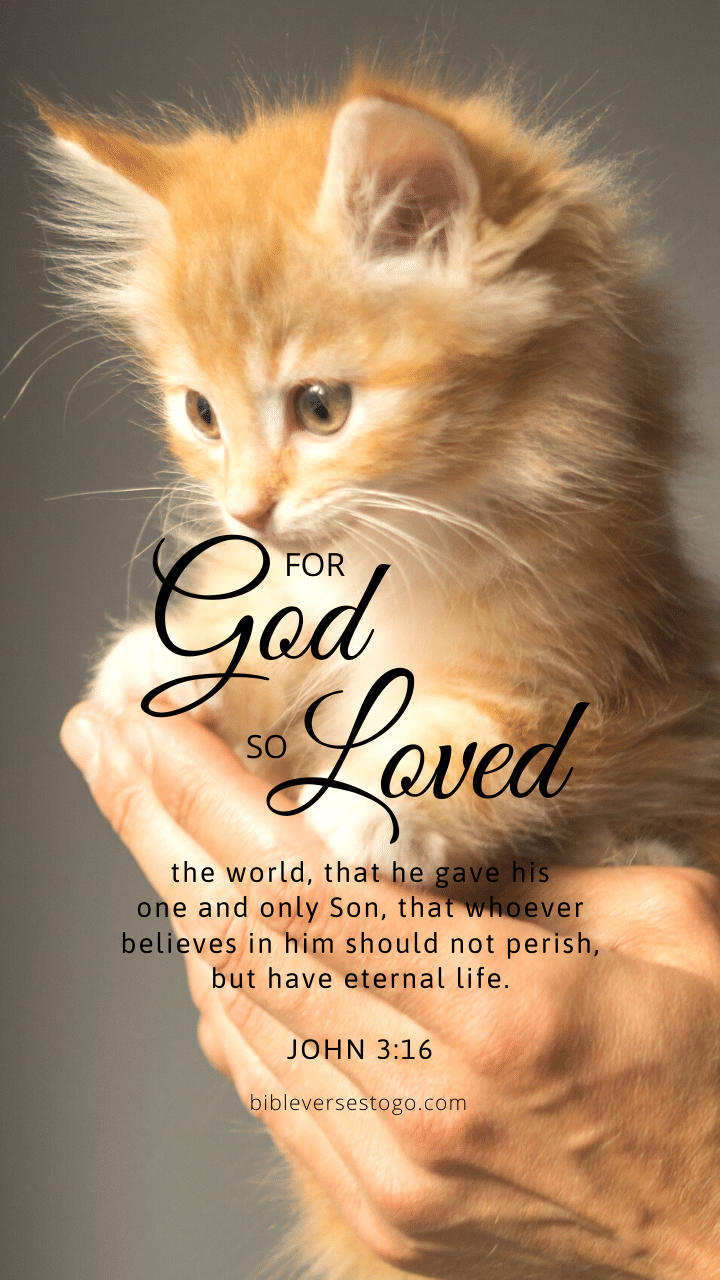 Christian Wallpaper - Kitten John 3:16