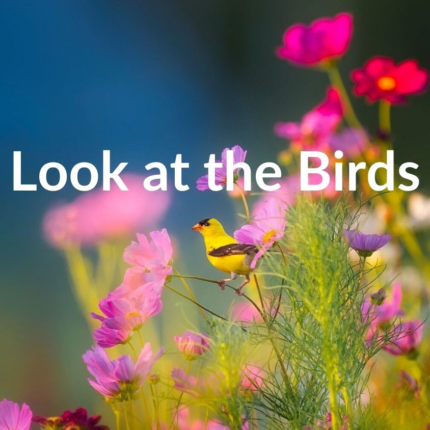 Matt 6:26 Look at the Birds - VIDEO