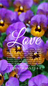 Christian Wallpaper – Pansies 1 Corinthians 13:4-8