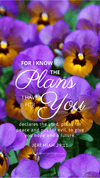 Christian Wallpaper – Pansies Jeremiah 29:11