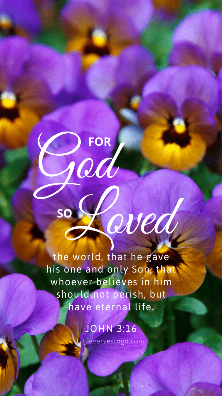 Christian Wallpaper – Pansies John 3:16