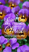 Christian Wallpaper – Pansies Philippians 4:13