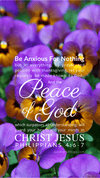 Christian Wallpaper – Pansies Philippians 4:6-7