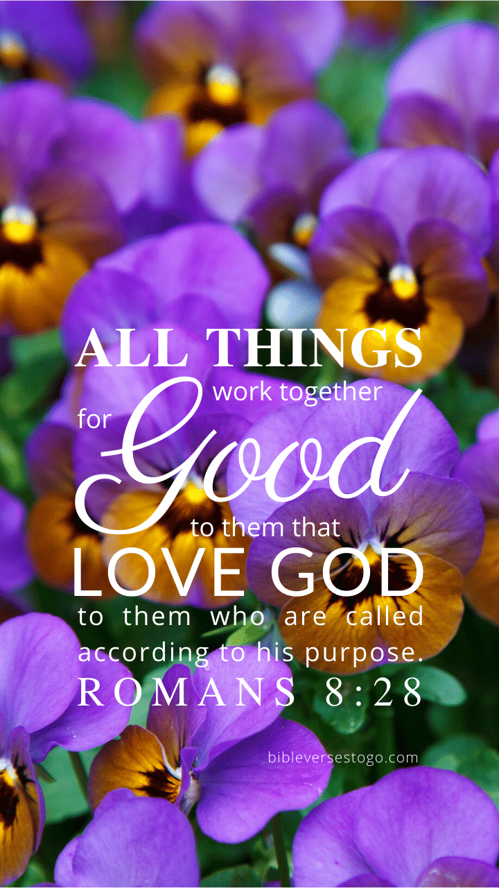 Christian Wallpaper – Pansies Romans 8:28