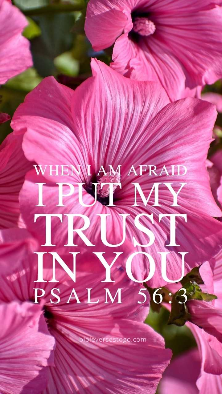 Christian Wallpaper - Pink Floral Psalm 56:3